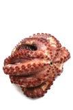 煮沸的困难章鱼 图库摄影