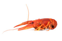 煮沸的小龙虾一 库存照片