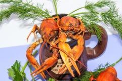 煮沸的小龙虾啤酒快餐。 库存图片