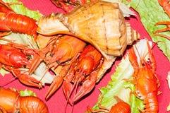 煮沸的小龙虾用啤酒 免版税库存图片