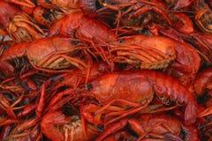 煮沸的接近的小龙虾  免版税库存照片