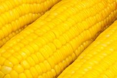 煮沸的特写镜头玉米 图库摄影