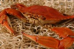 煮沸的特写镜头螃蟹 免版税库存图片
