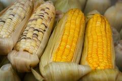煮沸的玉米在摊贩的停留演出地 免版税库存图片
