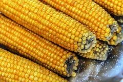 煮沸的玉米棒子 免版税库存图片