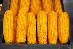 煮沸的玉米 免版税图库摄影