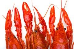 煮沸的碗小龙虾白色 免版税图库摄影
