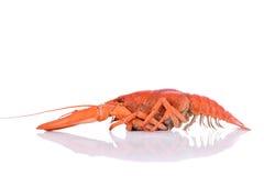 煮沸的红色小龙虾 库存图片