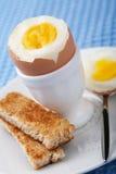煮沸的蛋装煮好带壳蛋之小杯 免版税图库摄影