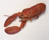 煮沸的龙虾 库存图片