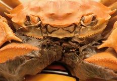 煮熟的上海长毛的螃蟹 库存照片