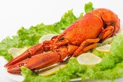 煮熟的和煮沸的红色龙虾 免版税库存照片