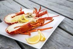 煮熟的和被对分的新西兰小龙虾 免版税图库摄影