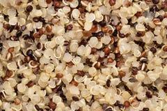 煮熟的奎奴亚藜播种充分的框架 免版税图库摄影