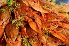 煮熟的小龙虾莳萝 库存照片