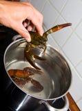 煮熟的小龙虾 库存图片
