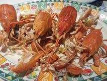 煮熟的小龙虾 库存照片