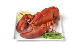 煮熟的新鲜的龙虾 图库摄影