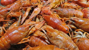 煮熟的欧洲河小龙虾在桌上转动 股票录像