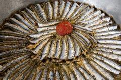 煮熟的沙丁鱼 库存照片