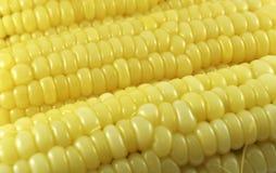煮熟的玉米 库存图片