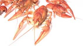 煮熟的红色小龙虾 影视素材