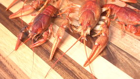 煮熟的红色小龙虾 股票视频