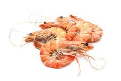 煮熟的老虎虾 图库摄影