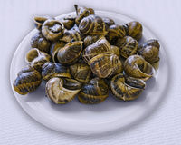 煮熟的蜗牛盘  图库摄影
