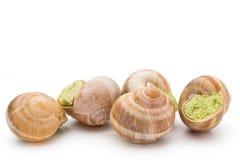 煮熟的蜗牛纤巧 法国烹调被充塞的蜗牛 免版税库存照片