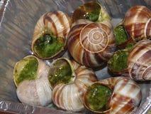 煮熟的蜗牛 免版税库存图片