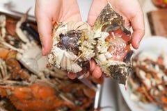 煮熟的青蟹 免版税库存图片