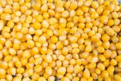 煮熟的黄色玉米五谷背景  免版税库存图片
