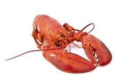 煮熟的龙虾 库存图片