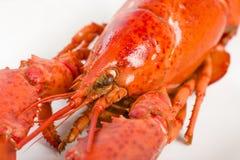 煮熟的龙虾 库存照片