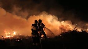 熄灭巨大的火在森林里在晚上 股票录像