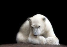 熊一点 免版税库存图片