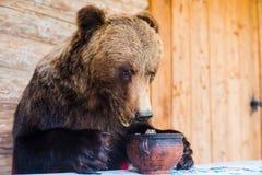熊充塞了 库存照片