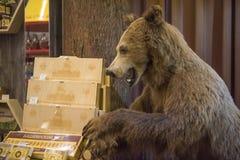 熊充塞了 库存图片