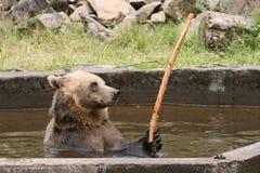 熊公园 库存照片