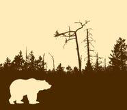 熊剪影向量 向量例证