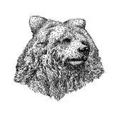 熊剪影样式 美丽的黑白动物的手拉的例证 在葡萄酒样式的线艺术图画 皇族释放例证