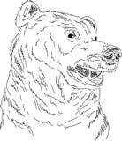 熊北美灰熊 库存例证