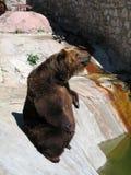 熊叫化子 库存照片
