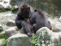 熊吃 库存图片