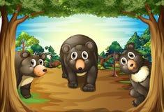 熊和密林 免版税库存照片