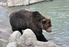 熊和湖 免版税库存图片
