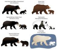 熊和熊崽 免版税库存照片