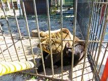 熊在动物园里 免版税库存图片