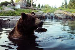 熊在水中 图库摄影